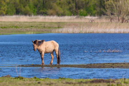 residual: Wild Horse In The Wetlands