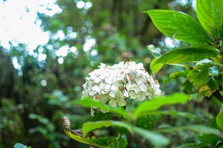 at white: white flower