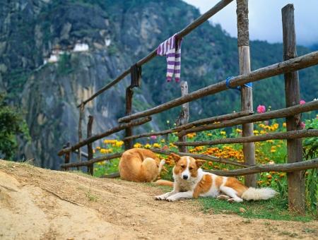 Himalaya, Tibet, Bhutan, Paro Taktsan, Taktsang Palphug Monastery  also known as The Tiger