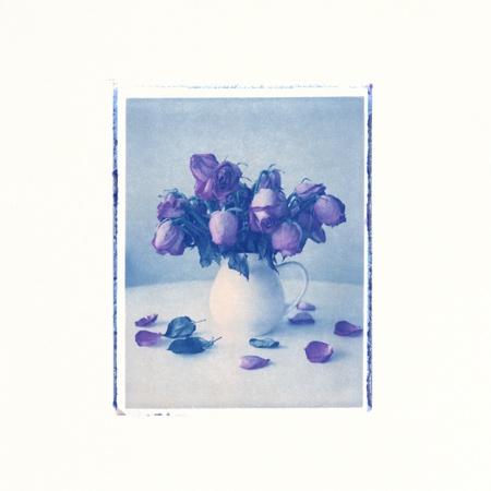 instant film transfer: Dead roses in vase, dry instant film transfer on watercolor paper