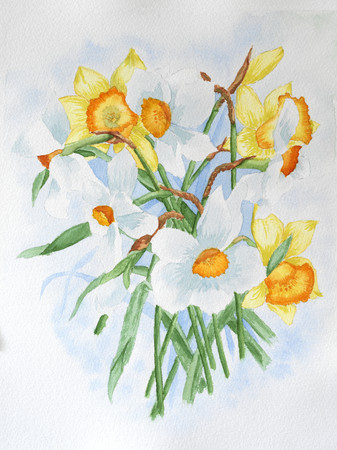 Watercolor painting of white and yellow Narcissus flowers Stockfoto
