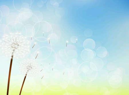 shiny: Nature blue sky bokeh freedom holiday