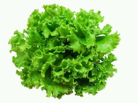 white: Green salad vegetable on white background
