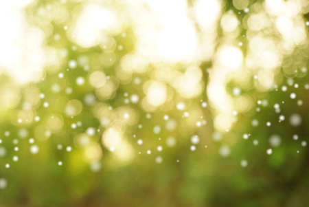 green nature with white blur bokeh abstract background, ecology concept