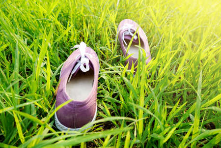 purple shoes: purple shoes on nature green grass in the morning,concept and idea background