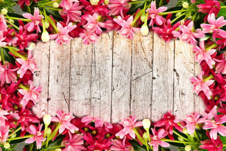 colorful pink blossom blooming flower border and frame on wooden background with copy space for text Banque d'images