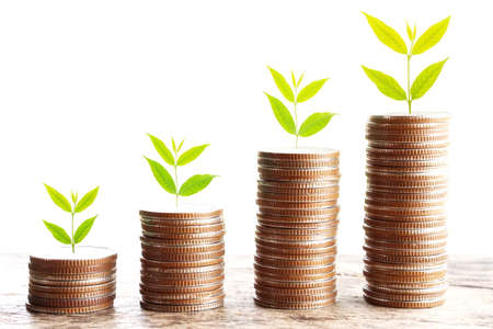 growth business concept, tree growing on stack of coins isolated on white background Stock Photo