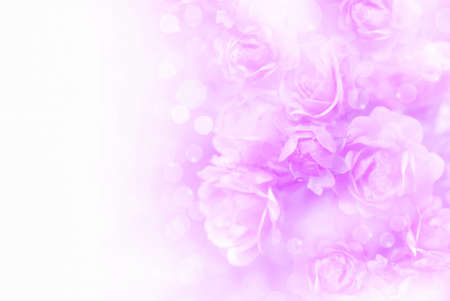 soft purple roses flower vintage background with copy space