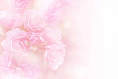 Fondo vintage de flor de rosas rosadas suaves con espacio de copia