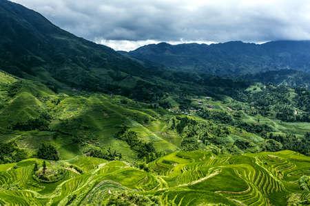 green ridge: Guangxi Guilin Longsheng longji terraced landscape