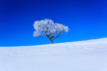 Inner Mongolia on winter snow scene