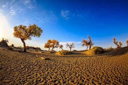 desert footprint: Desert footprints