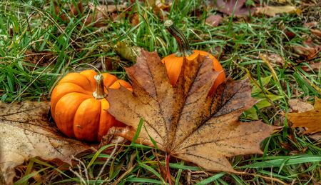 autumn leaf in front of an pumpkin
