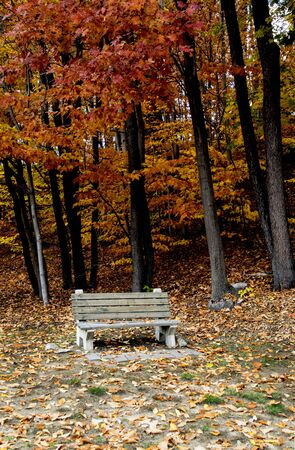 an park bench sits among the fall foliage in a park.