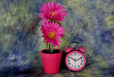 pink flowers with an pink alarm clockon a textued back ground. 版權商用圖片