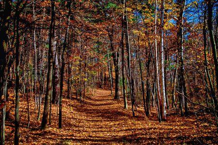 an trail cutting through a forest in autumn