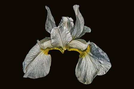 flower of dark ness