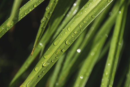 raindrops on a blade of grass 版權商用圖片