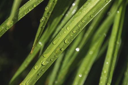 regendruppels op een grassprietje