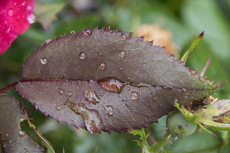 regendruppels op een blad