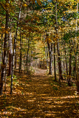 walking trail cutting through the forest, Stock Photo