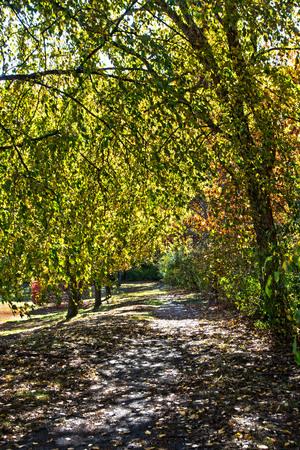昼に散歩道秋。 写真素材