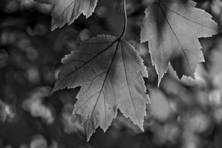 Autumn leave don in black and leaves