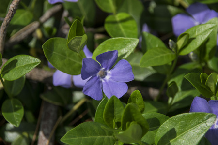 a small flower surrounded by plant leaves,