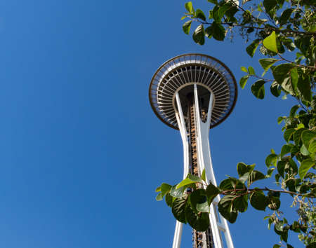space needle: Seattle Space Needle framed by brilliant green foliage.