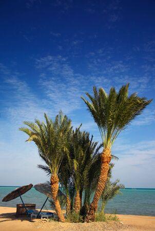 copse: Palm paradise beach Stock Photo