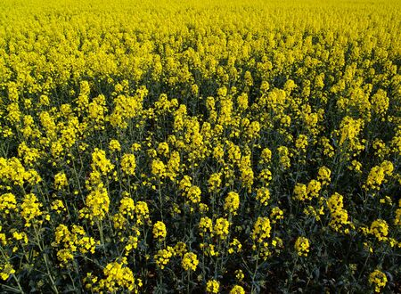 cash crop: Field of Gold.  Focus one-third up from bottom.