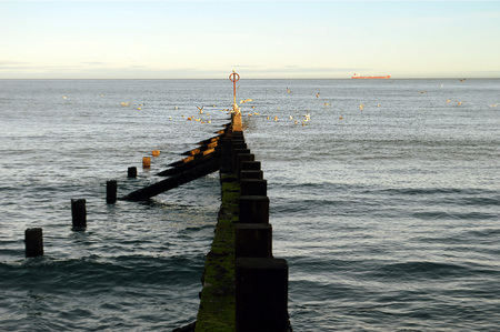 seabirds: One of the groynes used to protect the beach from sand erosion in Aberdeen, Scotland
