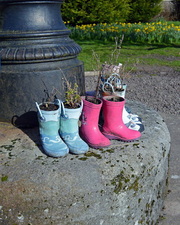 wellington: Wellington Boots used as plant pots