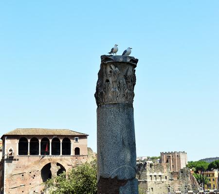 corinthian: Two European herring gulls (Larus argentatus) perch on a Corinthian column in the Forum of Trajan, Rome, Italy