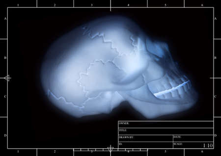 A plan of a skull Stock Photo