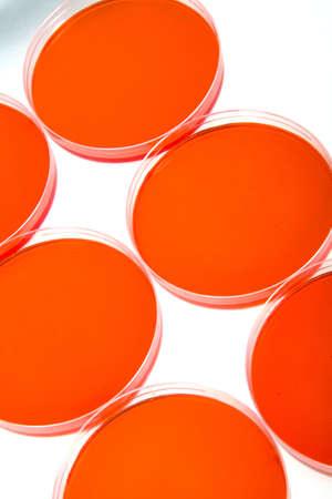 Petri dishes photo