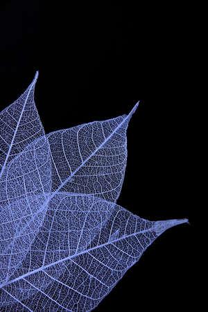 nervure: Hoja en azul
