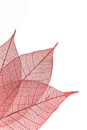 Leaf in red