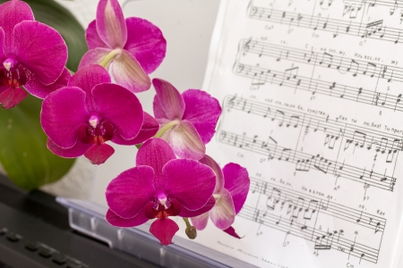 Pink orchid flower on a synthesizer keyboard with notes