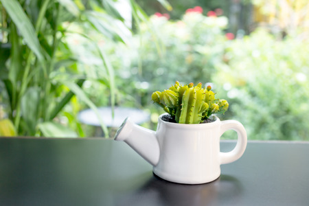 falsely: false cactus plant in white pot on glass table, interior decoration Stock Photo