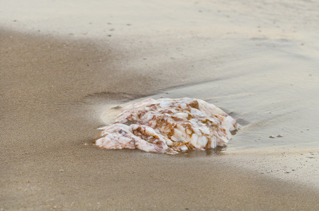 A rock on a sand beachมflat tip of rock protruding through sand on beach Imagens