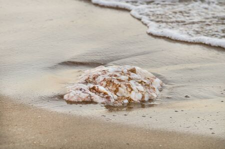 protruding: A rock on a sand beachมflat tip of rock protruding through sand on beach Stock Photo