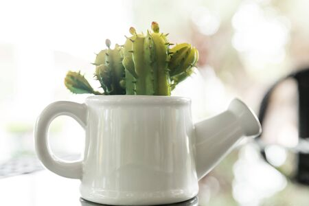 surrogate: false cactus plant in white pot on glass table, interior decoration, decoration Ideas Stock Photo