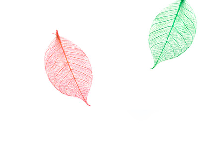 dry leaf: Dry leaf detail texture, color full Stock Photo