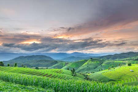 terraced: Terraced rice fields in northern Thailand, rice fields on terraced