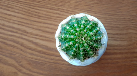 cactus in a pot placed on a wooden table : top view