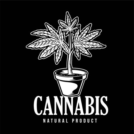 Vintage flower pot with plant of cannabis leaf marijuana weed green hemp for smoke. Retro illustration drawing print for poster t shirt embroidery sweatshirt banner sticker patch icon logo.