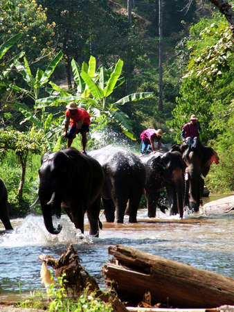 bathe: elephant bathe Editorial