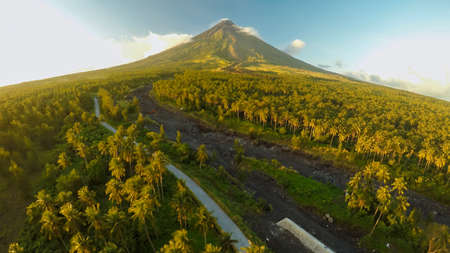 Mayon Volcano near Legazpi city in Philippines. Aerial view over the palm jungle and plantation at sunset. Mayon Volcano is an active volcano and 2462 meters high.