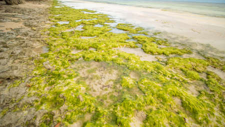 Flowering algae on the coast of the island of Bohol. Philippines. Evening time. Shooting in motion.